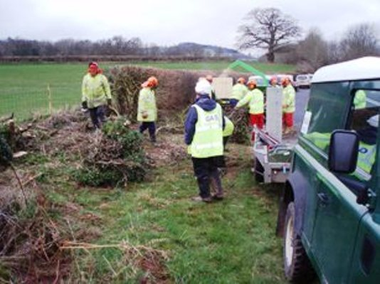 Advance coppicing to prevent birds nesting