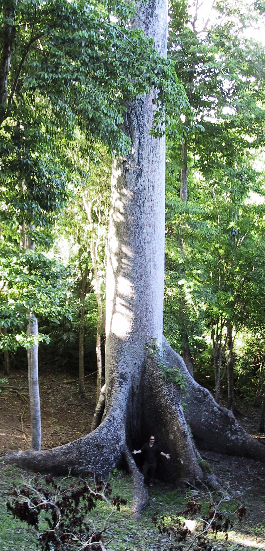 Belize forest, spot Andy